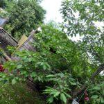 Blick übern Gartenzaun (Foto: Regina Katzer)