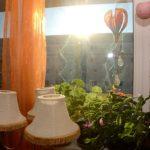 Hausbesuch im WK8 (Foto: Regina Katzer)
