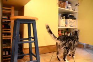 Wohnblog mal anders: Hausbesuch bei Kater Bruno (Foto: Regina Katzer)