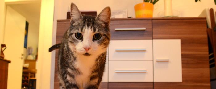 Wohnblog mal anders - Hausbesuch bei Kater Bruno (Foto: Regina Katzer)