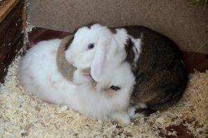 Kleine Umarmung von Merle und Doof (Foto: Regina Katzer)
