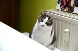 Katze Purzel schaut neugierig (Foto: Regina Katzer)