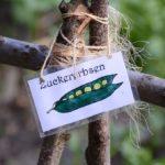 Erlebnisgarten für Jung und Alt (Foto: Regina Katzer)