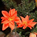 Weihnachtsstube von Oma Gertrud (Foto: Regina Katzer)